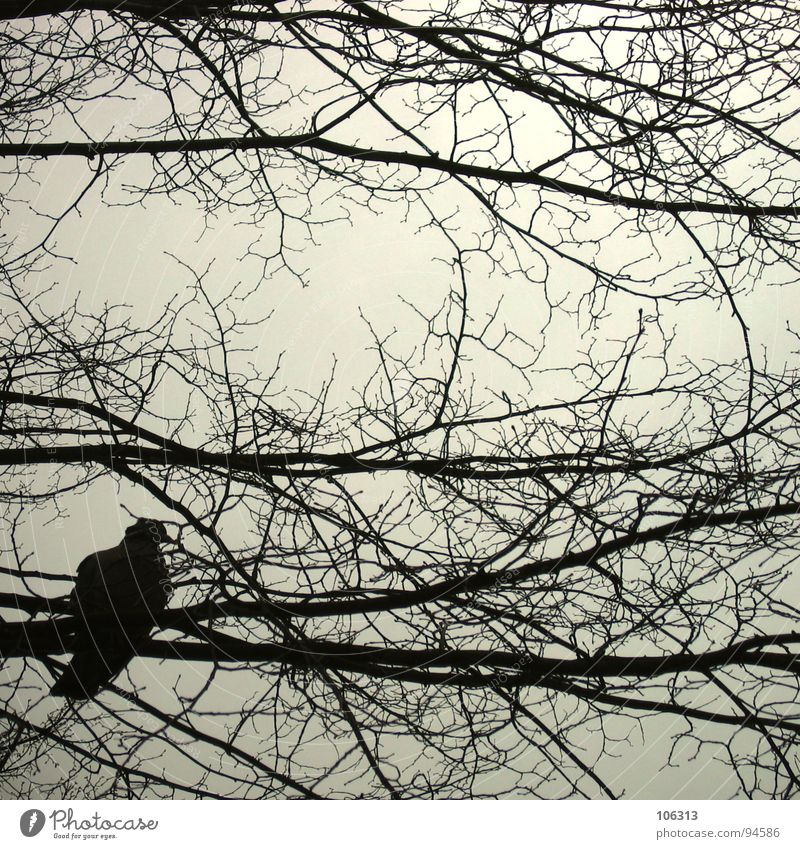 F. VOYAGE-IN... (II) Bird Pigeon Branchage Tree Silhouette Peace Safety Free Flying Nature Freedom be free ... Change Irritation