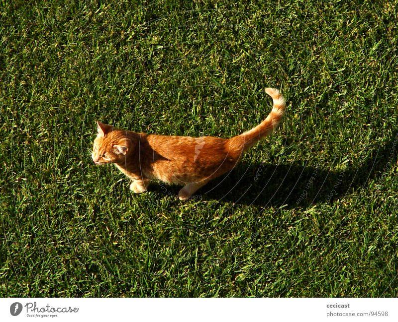 Animal Orange
