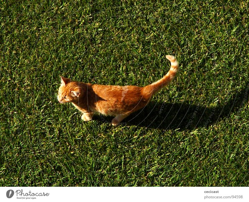 copycat Animal grass Orange shadow legs valley walk sun tangerine peacefull joy small morning mamal