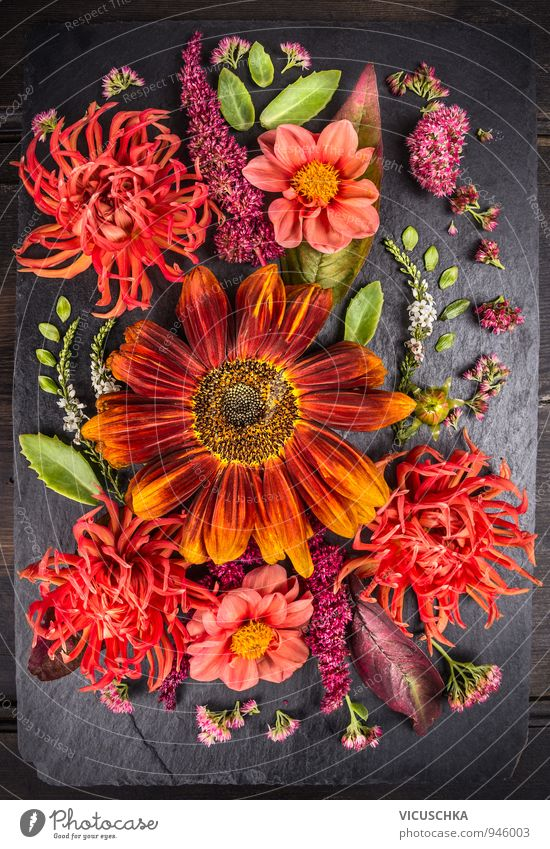 Autumn flower composition with sunflowers and dahlias. Style Design Life Leisure and hobbies Summer Garden Nature Plant Flower Leaf Blossom Bouquet Green Orange