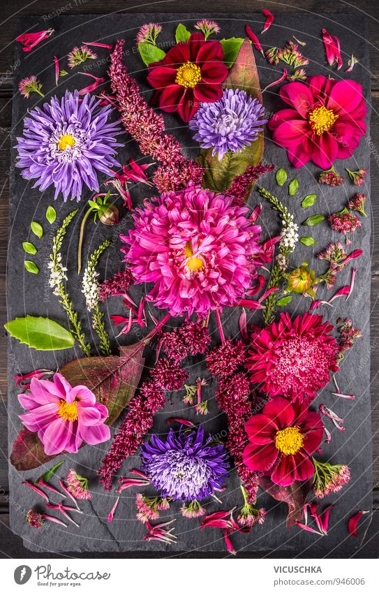 Composition of autumn flowers with asters, dahlias Design Life Leisure and hobbies Summer Nature Plant Autumn Flower Bouquet Background picture Aster beautiful