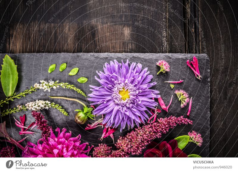 Autumn Decoration with Purple Aster Lifestyle Style Design Leisure and hobbies Summer Flat (apartment) Garden Nature Plant Flower Bouquet Retro Yellow Pink