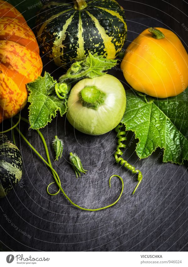 Colourful pumpkins with flowers, stems and leaves on slate Food Vegetable Organic produce Vegetarian diet Diet Design Leisure and hobbies Garden Thanksgiving