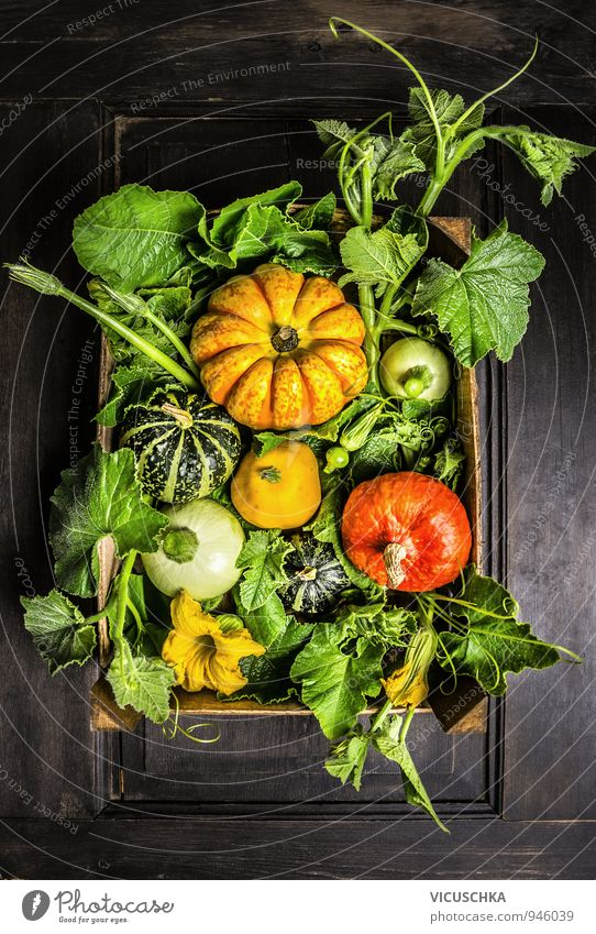 Pumpkins in wooden box with stems, leaves and flowers Food Vegetable Nutrition Organic produce Lifestyle Design House (Residential Structure) Garden Hallowe'en