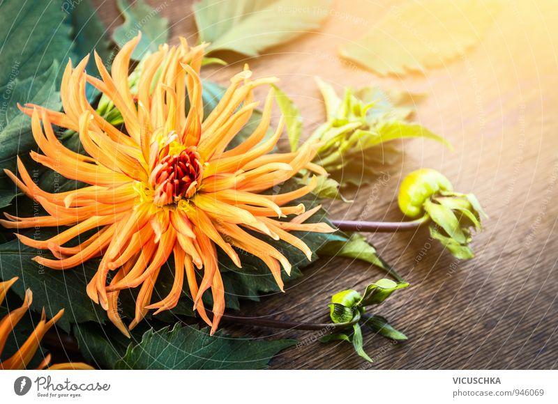 Nature Plant Green Summer Flower Yellow Autumn Wood Background picture Garden Park Lifestyle Leisure and hobbies Design Soft Bouquet