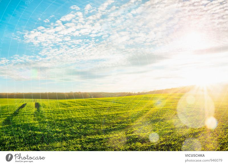 Morning landscape with green field in sunbeams Summer Environment Nature Landscape Plant Air Sky Clouds Horizon Sun Sunrise Sunset Sunlight Meadow Field Hill