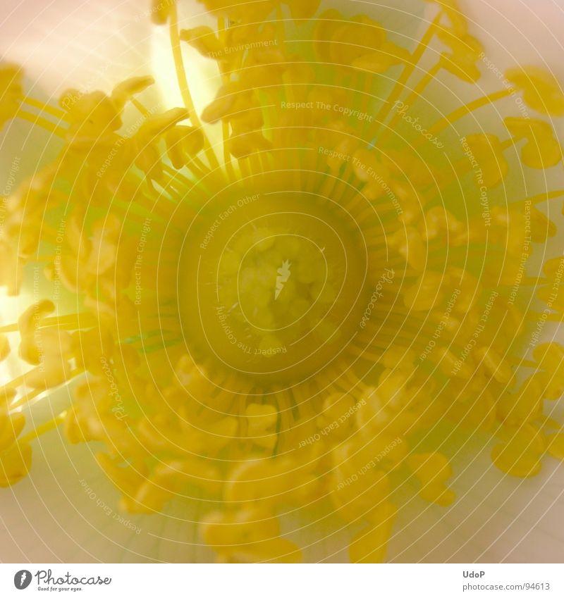 White Yellow Blossom Spring Pistil Blossom leave