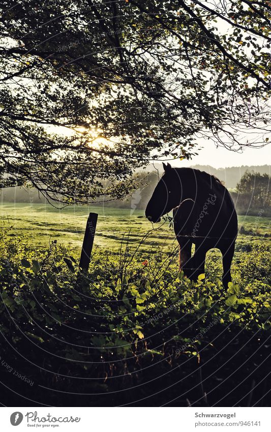 fury Ride Equestrian sports Environment Nature Landscape Plant Animal Beautiful weather Tree Grass Meadow Field Pet Farm animal Horse 1 Observe Authentic
