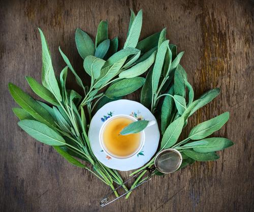 Cup of tea with fresh sage leaves Beverage Tea Crockery Plate Lifestyle Healthy Alternative medicine Healthy Eating Leisure and hobbies Summer Winter