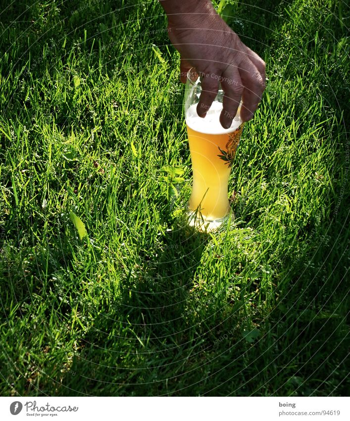 Angels drink yellow - Alois Hingerl plucks on the beer meadow Door handle Catch Grasp Meadow Evening sun Hand Lumberjack Beer Yeast Wheat Dreary Bright Foam