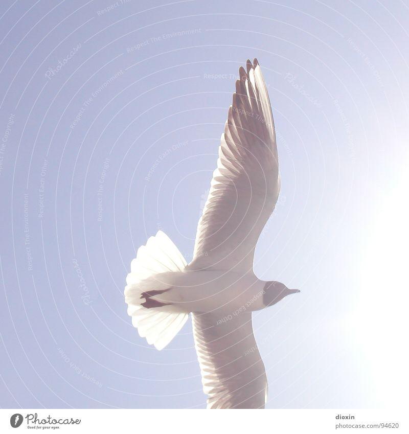Sky White Sun Ocean Blue Summer Animal Bird Coast Weather Flying Aviation Feather Wild animal Beautiful weather Seagull