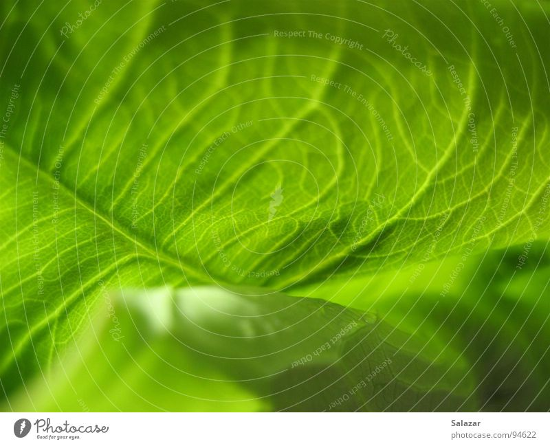 Nature Green Plant Summer Leaf Jump Blossom Spring Wet Force Fresh Multiple Round Near Delicate Blossoming