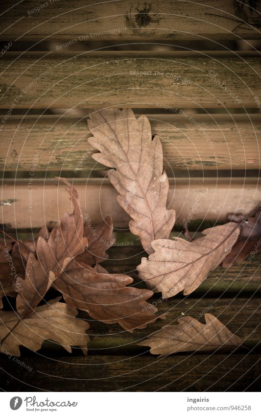 Nature Plant Green Leaf Autumn Natural Death Wood Garden Time Brown Moody Lie Gloomy Grief To fall
