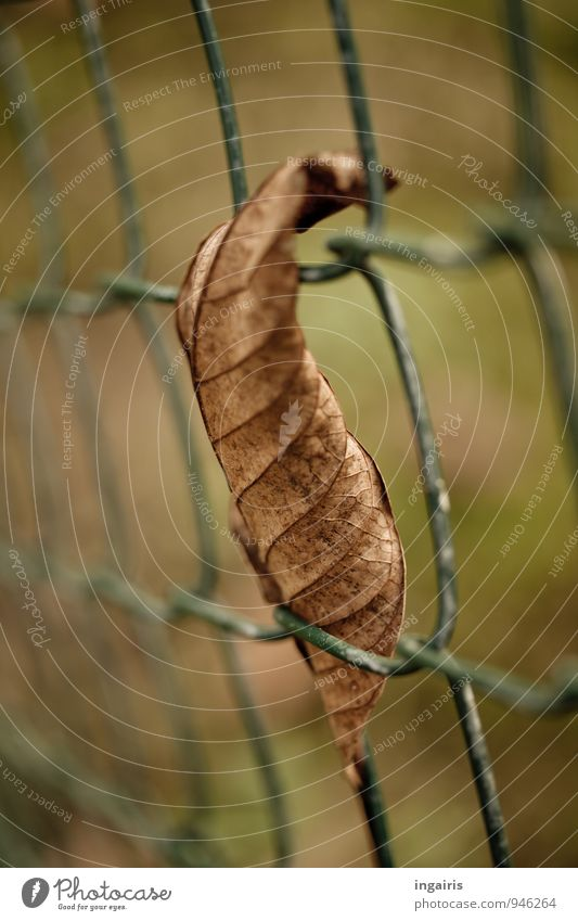 Autumnally clamped Nature Plant Leaf Fence Metal Hang To dry up Gloomy Dry Brown Green Contentment Break Moody Autumn leaves Wire netting fence Detail