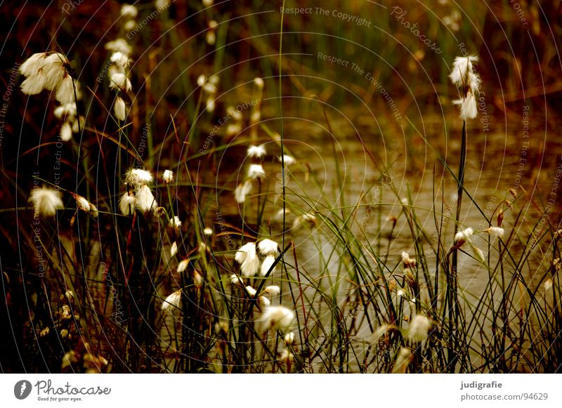 Green Beautiful Plant Summer Meadow Grass Glittering Transience Soft Delicate Pasture Stalk Blade of grass Smooth Flexible Pollen