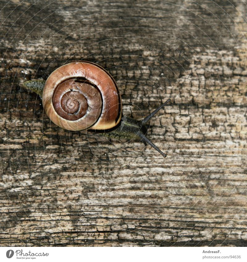 Nature Vacation & Travel Animal House (Residential Structure) Wood Lanes & trails Movement Time Flat (apartment) Speed Safety Tree trunk Snail Crawl Slowly Slimy