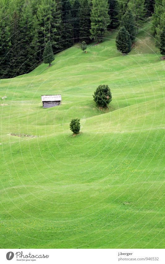 Nature Plant Green Summer Tree Landscape Forest Mountain Meadow Grass Hill Alps Pasture Coniferous forest Alpine