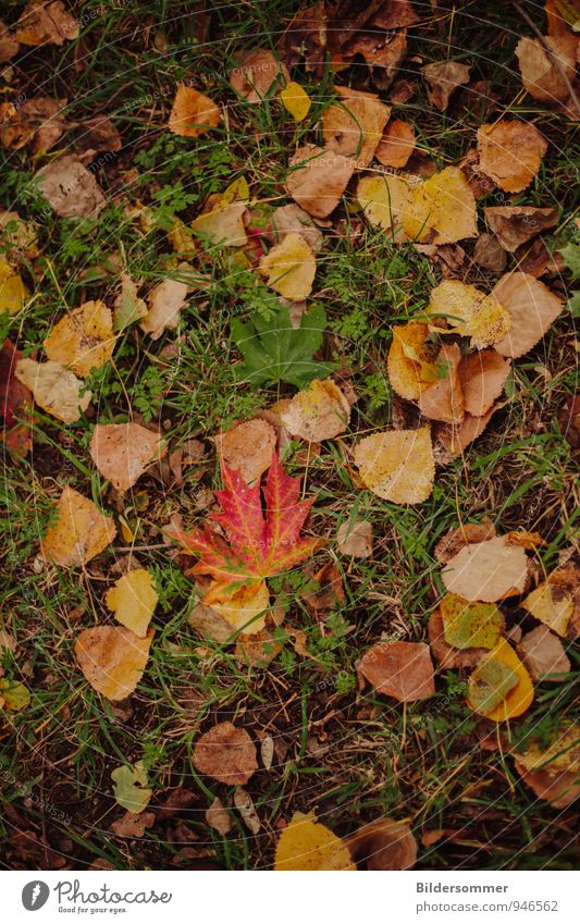 autumn foliage Nature Plant Autumn Weather Leaf Meadow To fall Lie Brown Yellow Green Orange Red Senior citizen End Environment Decline Transience Autumnal
