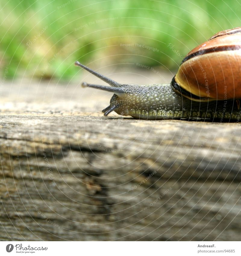 always following the nose Mucus Slimy Speed Wood Tree trunk Cottbus House (Residential Structure) Snail shell Crawl Slowly Time Animal Movement Flat (apartment)