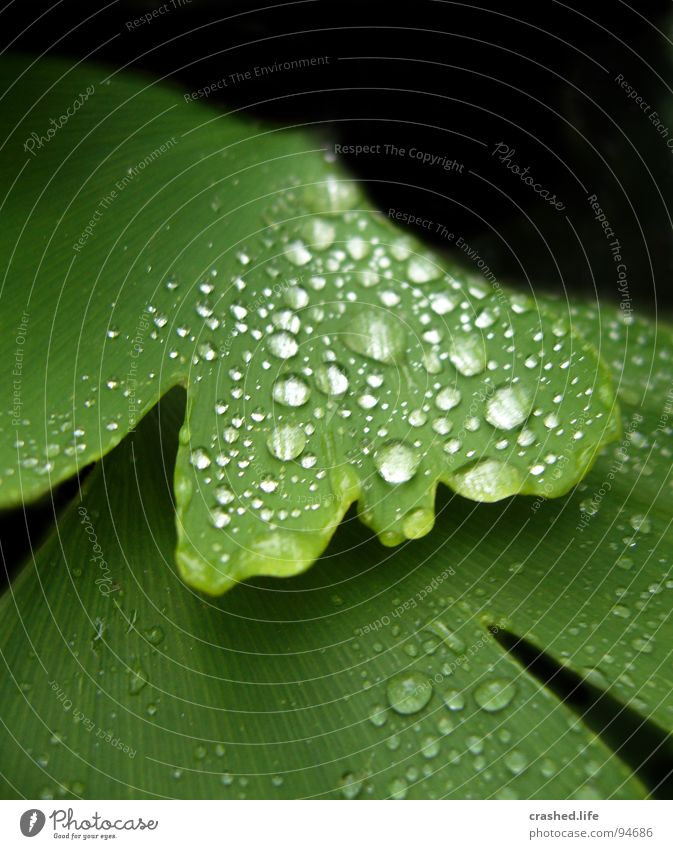Nature Plant Green Water Leaf Black Garden Rain Drops of water Wet Clarity Near Crystal structure Striped Damp Lettuce