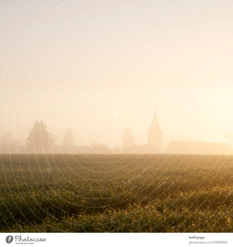 Leave the church in the village. Environment Nature Landscape Plant Animal Drops of water Autumn Fog Foliage plant Field Village Dawn Morning fog Commune