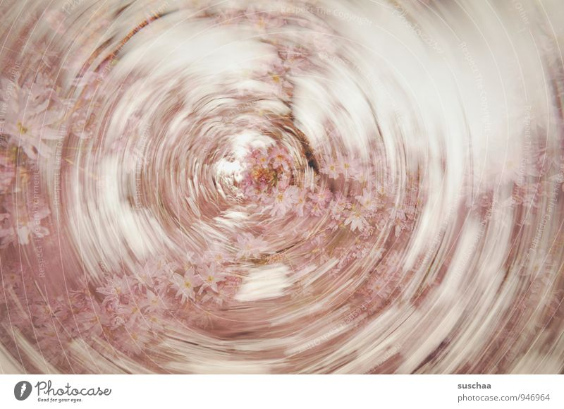 springtime wis(c)h Art Nature Spring Blossom Exceptional Fragrance Kitsch Round Pink Speed Dynamics Rotate Colour photo Subdued colour Exterior shot