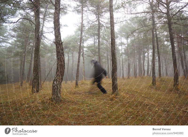 Human being Nature Man Tree Landscape Black Forest Adults Autumn Grass Brown Fog Walking Clothing Seasons Running