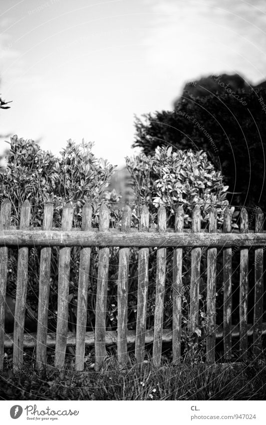 all slats on the fence Environment Nature Sky Clouds Tree Bushes Garden Fence Fence post Border Black & white photo Exterior shot Deserted Day