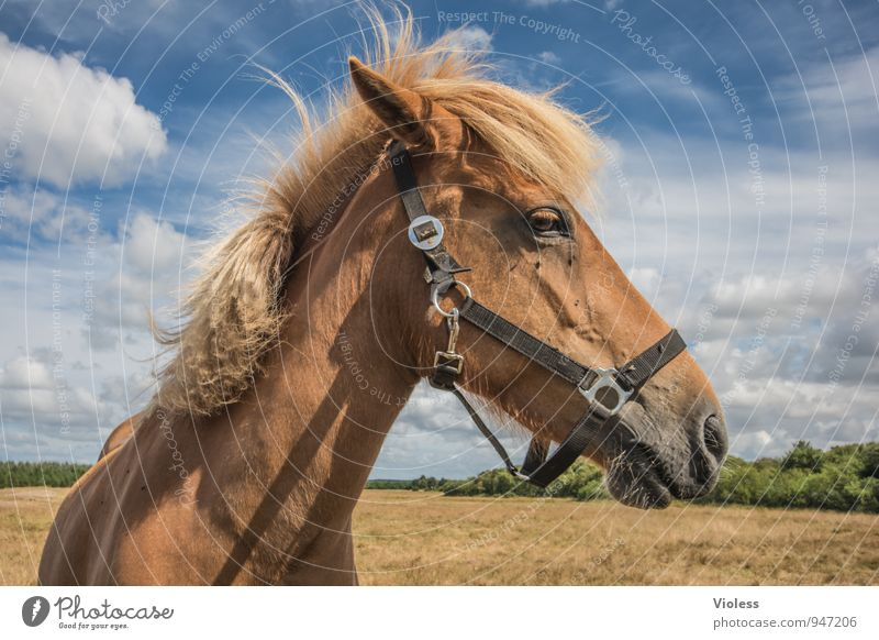 Joy Animal Natural Brown Power Horse Pelt Trust Animal face Pony Love of animals Mane Bridle