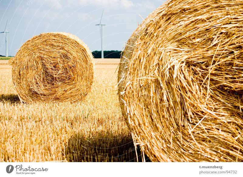 Yellow Autumn Landscape Wind Wind energy plant Americas Straw Bale of straw