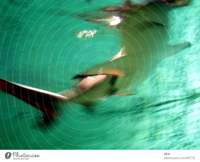 (Finance) Shark? Frankfurt Zoo Aquarium Share Warped Long exposure Dark Motion blur Blur Wet Financial Industry Fish finance shark loan shark financial world