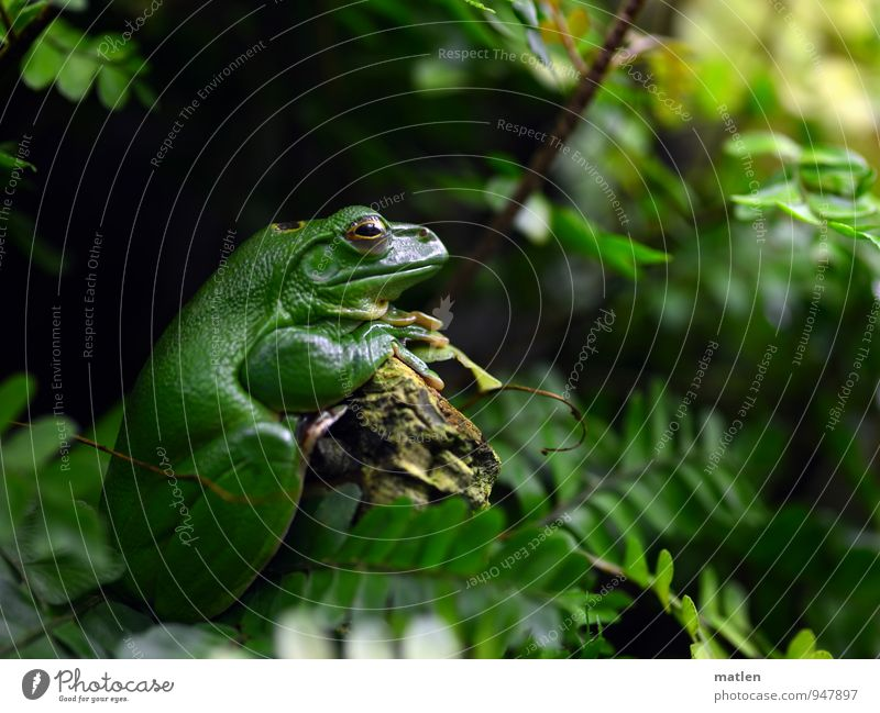 SittingBleiber Nature Plant Animal Moss Fern Deserted Frog Animal face 1 Wait Brown Green Rest on Serene Colour photo Day Worm's-eye view Portrait photograph