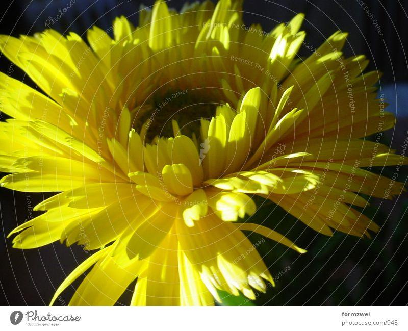flower Flower Blossom Things