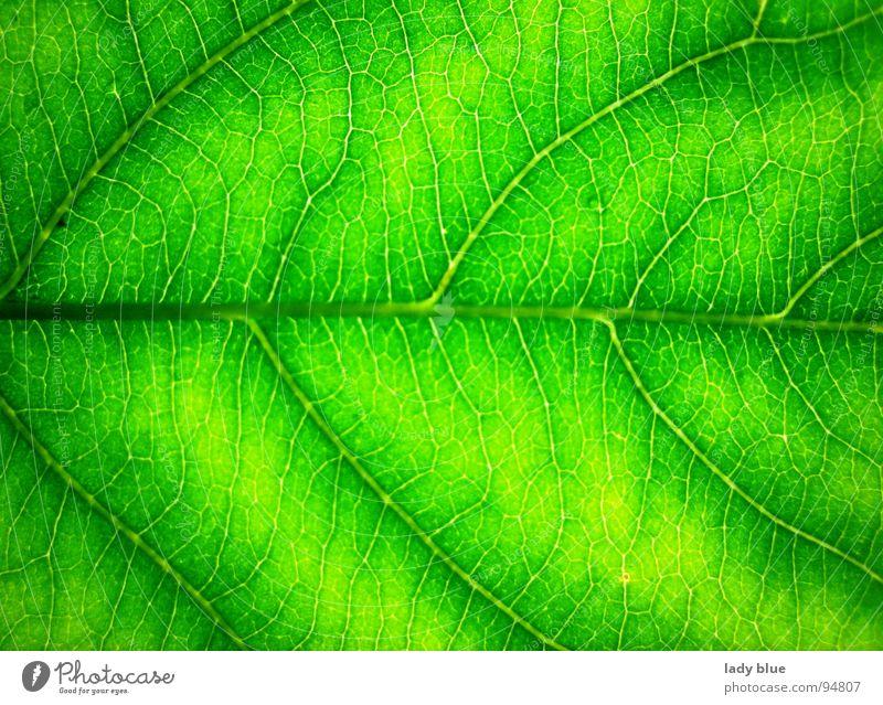 Nature Green Summer Calm Garden Line Bright Power Environment Fresh Near Pure Harmonious Fine Rachis