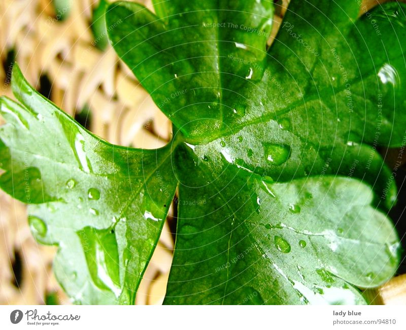 Nature Green Plant Nutrition Garden Rain Line Brown Healthy Wet Drops of water Fresh Decoration Near Herbs and spices Damp