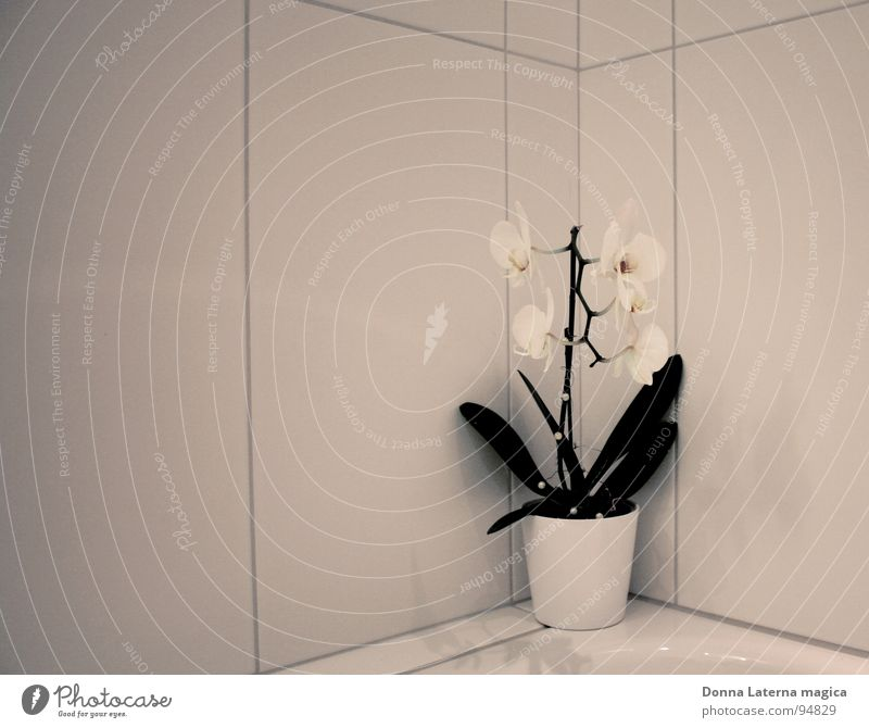 little flowers Orchid Flower White Gray Green Bathroom Seam Deities Blossom Loneliness Biased Cold 4 Bright plate Prefab construction Life God Corner