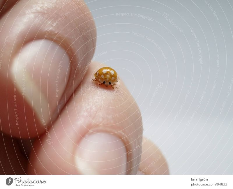 Nature Hand White Joy Animal Yellow Emotions Happy Skin Fingers Insect Point Touch Patch Ladybird Beetle