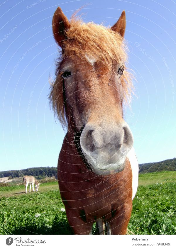 horse Animal Farm animal Horse Animal face 1 2 Funny Blue Brown Green White Colour photo Exterior shot Day Looking into the camera Forward