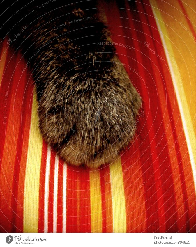Red Yellow Dark Hair and hairstyles Cat Bright Stripe Living room Boredom Smooth Mammal Paw