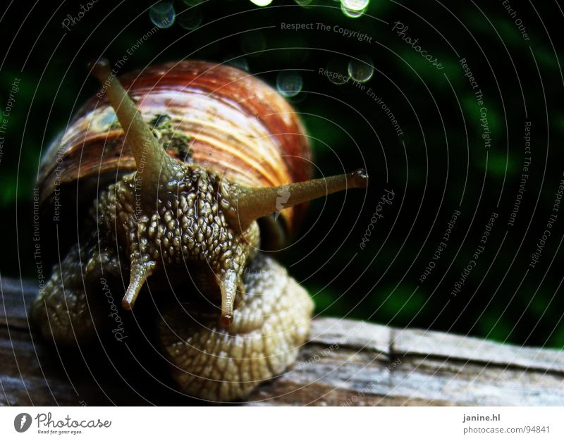escargot Vineyard snail Soft Sweet Disgust Slimy Slowly Green Brown Fresh Summer Autumn Animal Curiosity Interesting Feeler Love of nature Speed Crawl