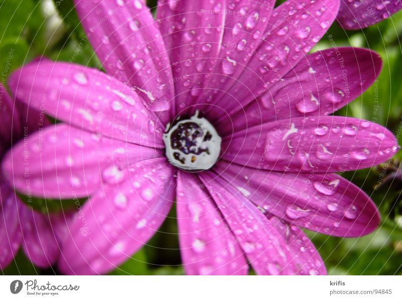 Sprinkled Flower Blossom Drops of water Rain Water