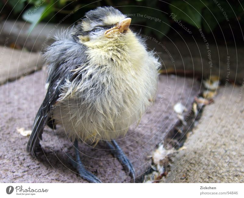 beeping bug Bird Animal Nest Chick Tit mouse Finch Eaves Gray Beak Claw fur ball Egg Garden Stone Nature Feather Baby animal