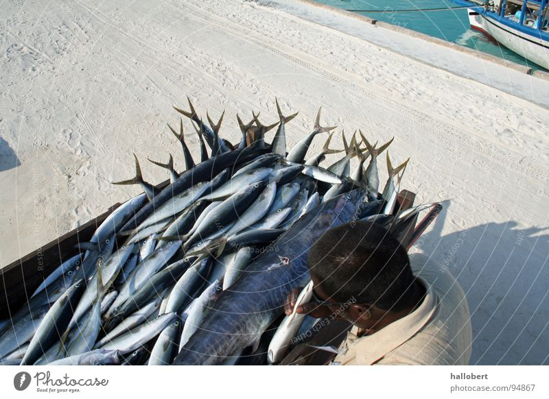 Water Ocean Vacation & Travel Fish Fishing (Angle) Maldives Fisherman Angler