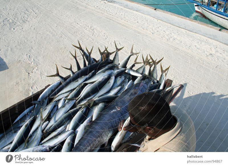 Water Ocean Vacation & Travel Fish Fishing (Angle) Maldives Fisherman Angler