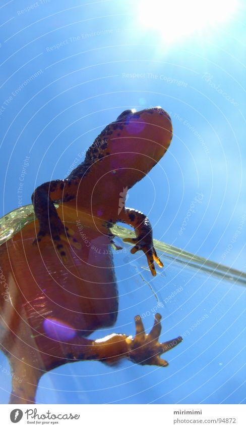 Molchis World2 Vase Amphibian Newt Fingers Sky Orange Blue