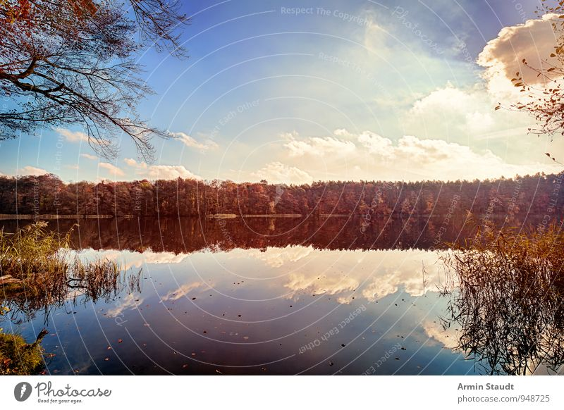 Autumn forest at the lake Relaxation Calm Vacation & Travel Nature Landscape Water Sky Clouds Sun Sunlight Beautiful weather Forest Lakeside Esthetic