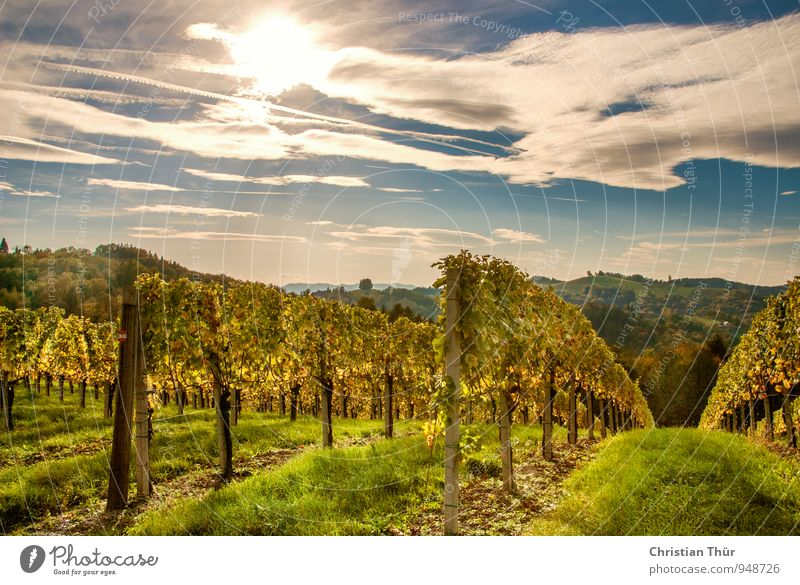 Herstnachmittag in the vineyards Lifestyle Vacation & Travel Tourism Trip Far-off places Mountain Hiking Environment Nature Landscape Plant Sky Clouds Sun