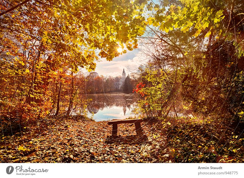 Sky Nature Vacation & Travel Beautiful Sun Relaxation Landscape Calm Clouds Forest Autumn Happy Freedom Exceptional Bright Moody