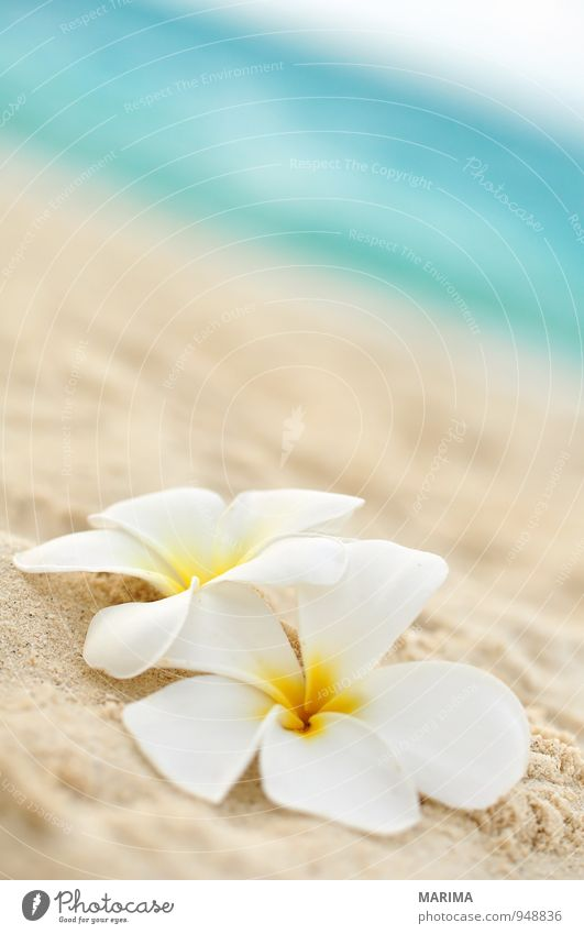 Nature Vacation & Travel Plant White Water Summer Relaxation Ocean Flower Beach Yellow Blossom Sand Planning Asia Turquoise