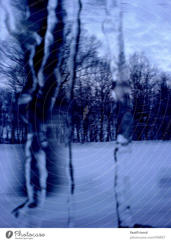White Tree Blue Winter Forest Cold Snow Ice Frost Frozen Window pane Express train Icicle Degrees Celsius